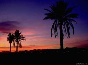 Tropical-sunset-Arizona-269677